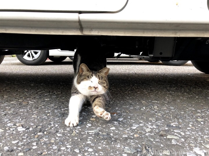 車の下のキジトラ白猫さん