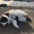 長毛の黒白猫さん