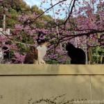 お寺の塀の上の猫さんたち