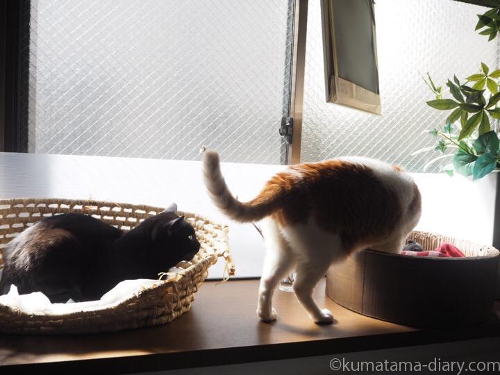 出窓たまきとふみお