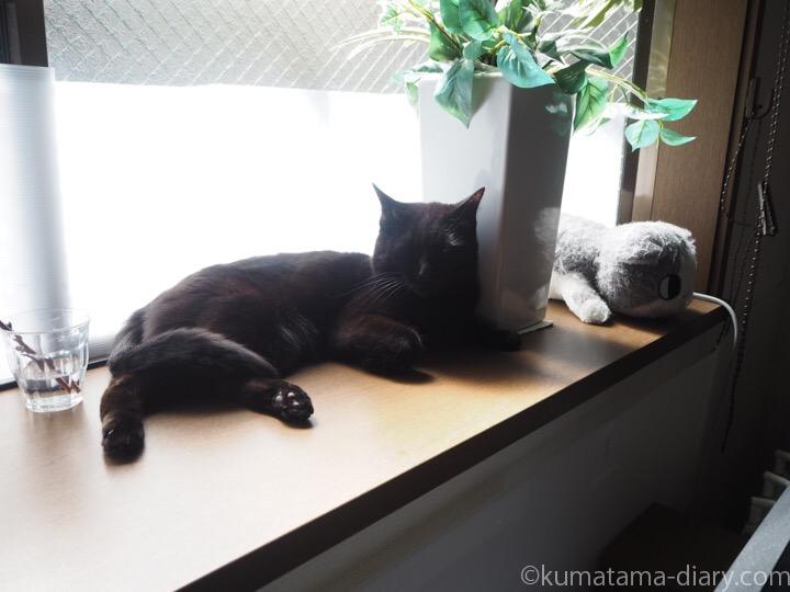 出窓で寝るふみお