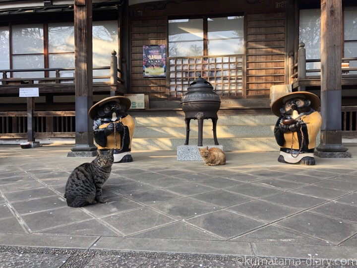 お寺の猫さんたち