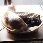 「メイズ製ペット用ベッド」を横取りした猫