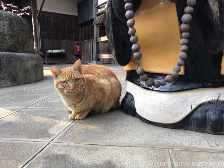 お寺の茶トラ猫さん