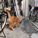 路地の茶トラ猫さんたち