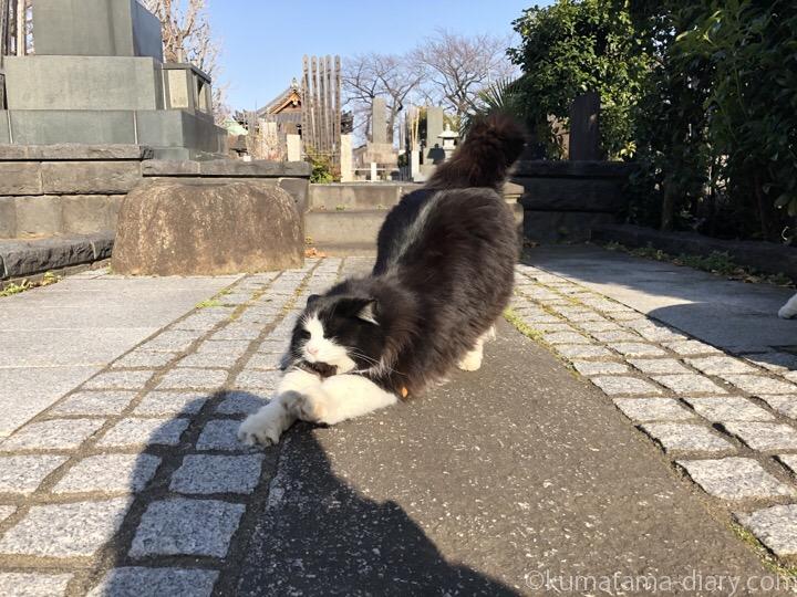 伸びる黒白猫さん