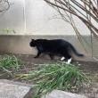 歩く黒白猫さん
