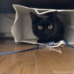 紙袋に入って遊ぶ猫が気になったもの