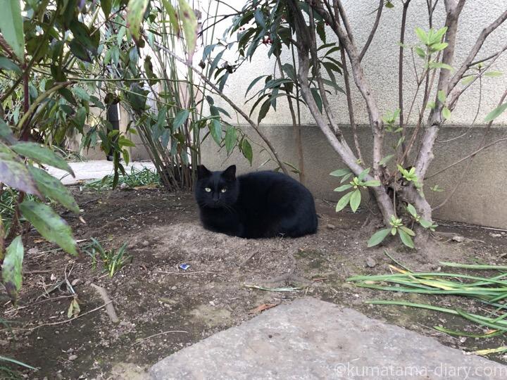 お寺の黒猫さん