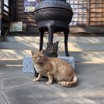 警戒心が強いお寺の猫さんたち