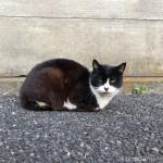 【文京区】駐車場に集まる3匹の猫さん
