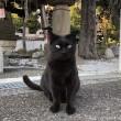神社の黒猫さん