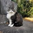 長毛のキジトラ白猫さん