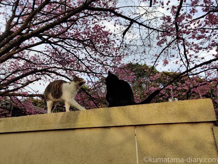 塀の上の猫さんたち