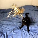 猫の家のおもちゃ「黄金麺」に飛びつく猫