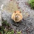 線路敷地の茶トラ猫さん