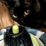 猫の誕生日プレゼントに「コング キャットニップスプレー」を買ってもらいました
