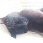 出窓の「メイズ製ペット用ベッド」で熟睡する黒猫