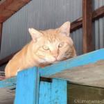 夏日なので涼しい場所にいた猫さんたち