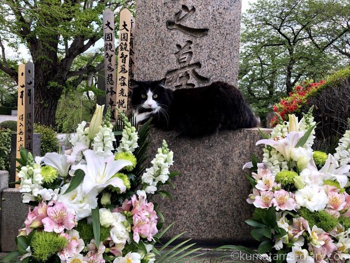 お墓の上の黒白猫さん