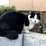 巣鴨で見かけた黒白猫さん