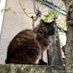 スリスリするキジトラ白猫さんとふわふわの長毛猫さん