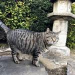 【巣鴨】染井霊園で見かけた体の大きなキジトラ猫さん
