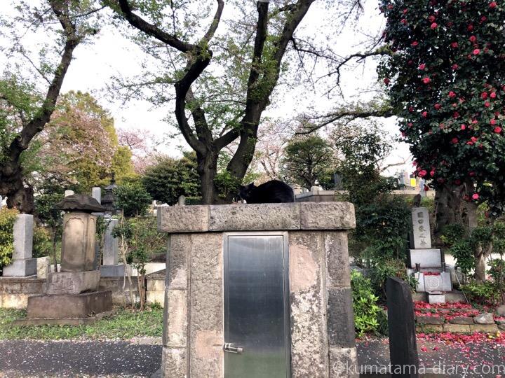 染井霊園黒猫さん