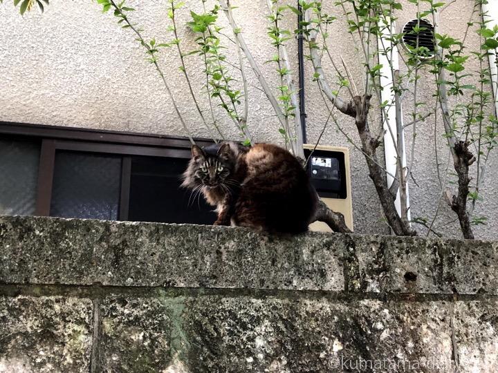 長毛猫さん
