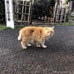 【巣鴨】染井霊園の茶トラ猫さんについていきました