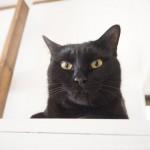 食洗機の上で香箱座りをする猫