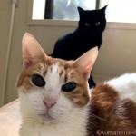 朝だけ一緒に半身浴する猫たち