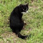 雑司ヶ谷霊園で見かけた黒白猫さん