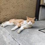 日陰で寝そべる猫さんたち