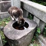 水を飲んでいた雑司ヶ谷霊園の猫さん