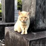 【巣鴨】染井霊園の茶トラ猫さんとおしゃべりしました