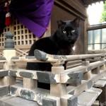 【文京区】神社の祠にいた黒猫さん