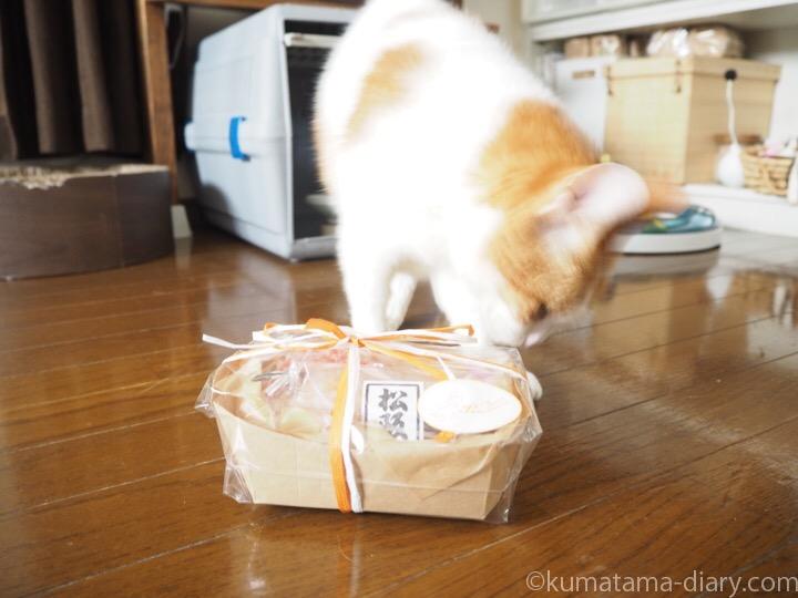 猫用ディナーとたまき