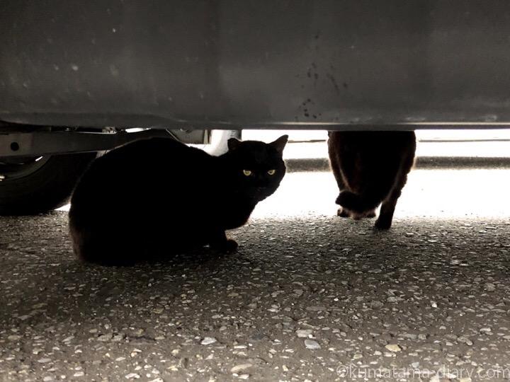 車の下の黒猫さん