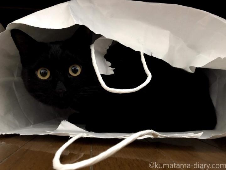 紙袋に入るふみお