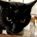 ホコリまみれになった黒猫