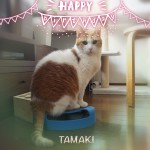 猫用ディナーとプレミアムキャットフード専門店「tama」のフードで誕生日をお祝い♪