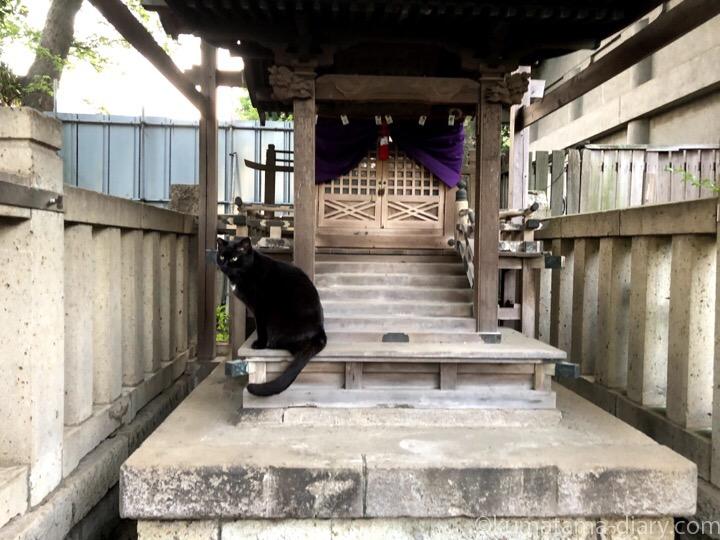 祠の黒猫さん