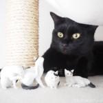 「森口修の猫 フィギュアマスコット」に噛みつく猫