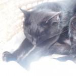 出窓の「メイズ製ペット用ベッド」で前足を伸ばして眠る猫