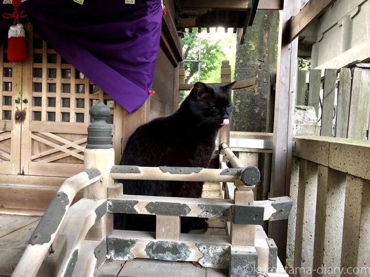祠の黒猫さんの舌