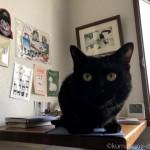 「Apple Smart Cover」に乗る猫