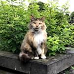 小雨の墓地で見かけた猫さんたち