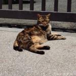 【文京区】小石川植物園の猫さん