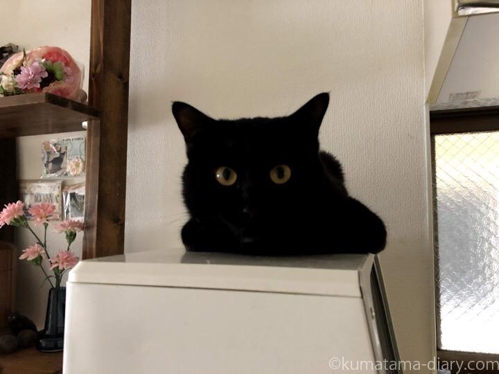 食洗機の上のふみお